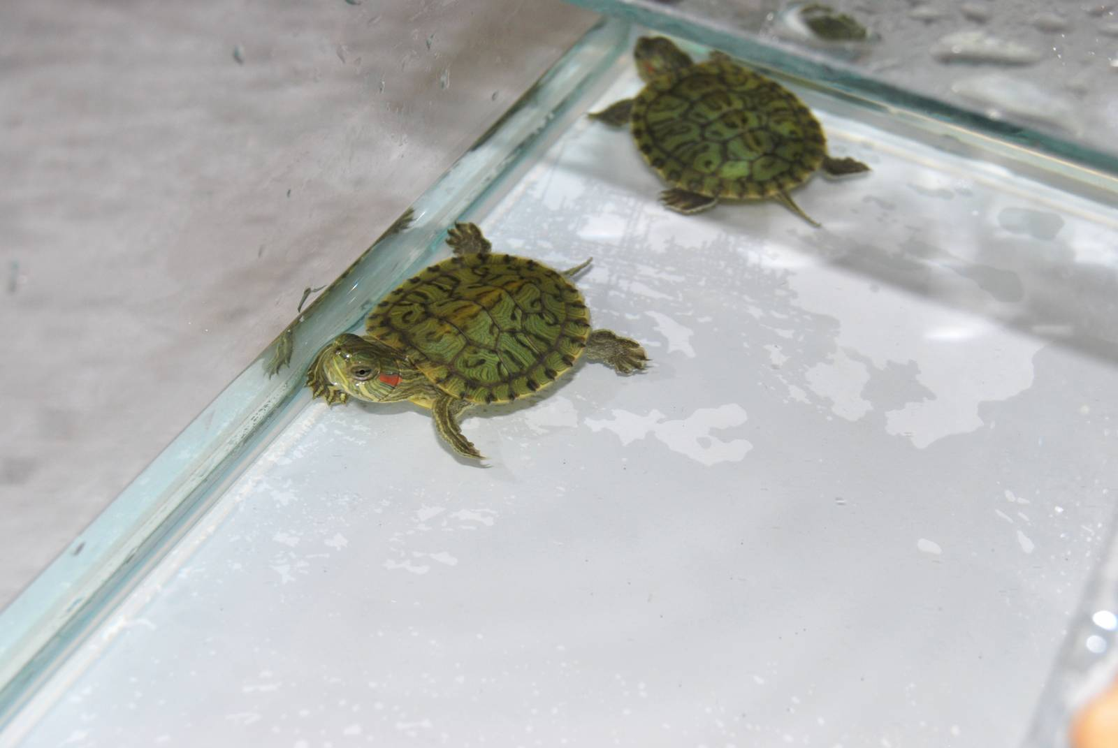 Как живут водяные черепахи в домашних условиях 618